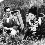 2.野菊の墓